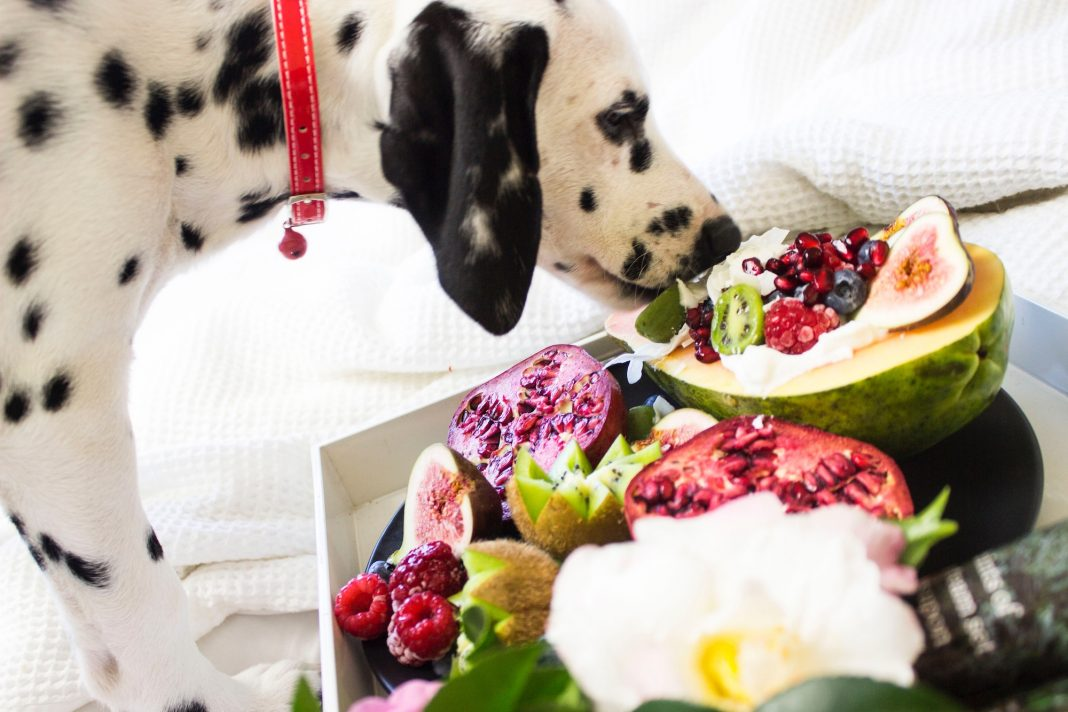 dogs food fruits